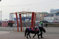 Владивосток ждет снега