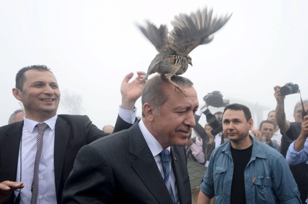 Куропатка села на голову президента Тайипа Эрдогана во время его посещения центра лесного хозяйства в Ризе, 14 августа 2015 года.