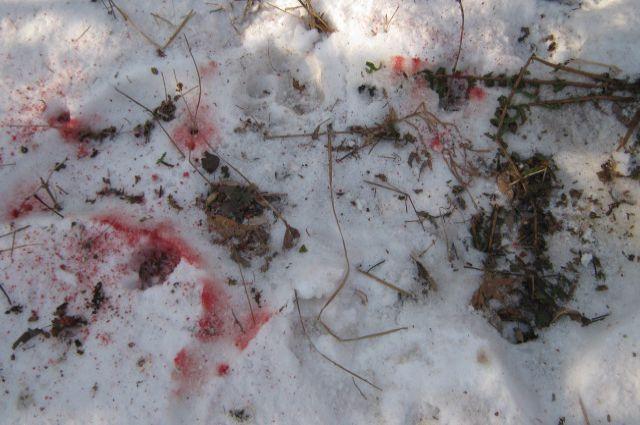 Следы крови на месте происшествия.