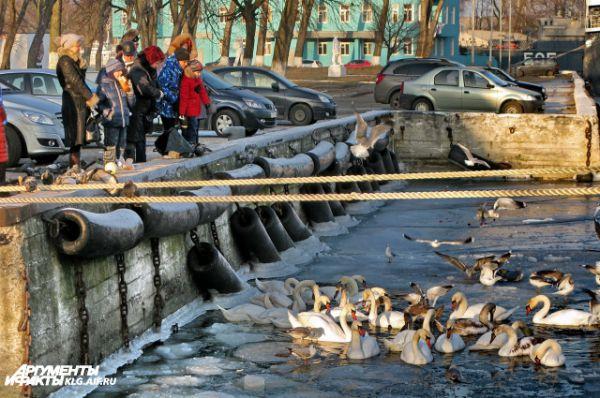 Калининградцы приезжают в Балтийск, чтобы покормить птиц.