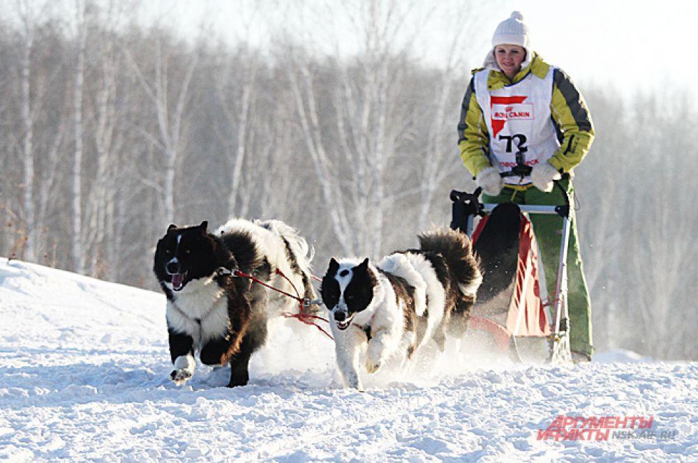 Вожак выбирает оптимальный путь и скорость, он управляет упряжкой с помощью двух помощников.
