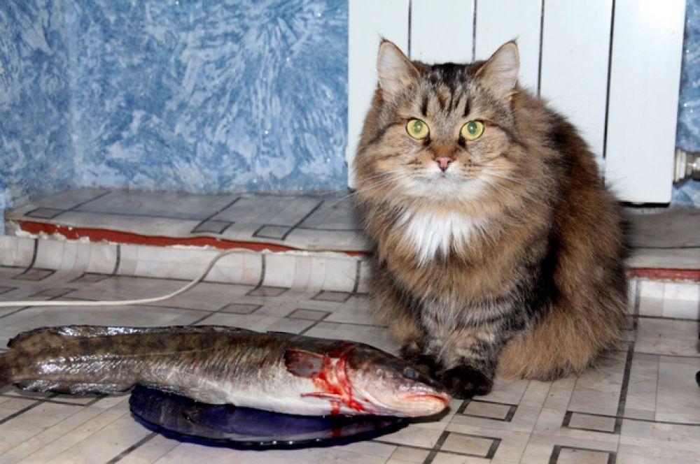 Кошка Соня перед завтраком