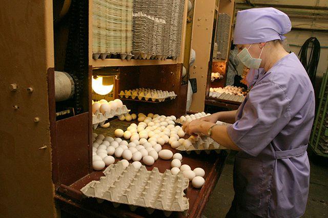Кировские птицефабрики переживают не лучшие свои времена.