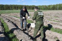 План по восстановлению леса за год выполнен в полном объеме