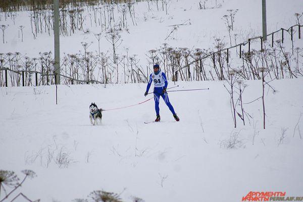 Гонки на собачьих упряжках «Лунежские горы» проходят уже третий год подряд.