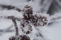 Холодный арктический воздух распространится по всей территории области.