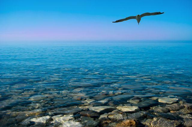 Черное Море Скачать Торрент - фото 5