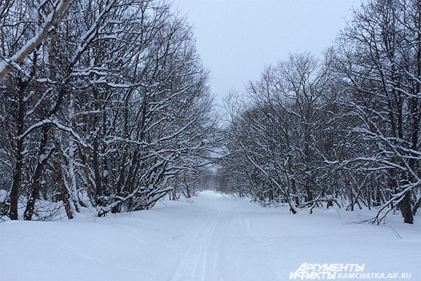 Экстемальные виды спорта развиты на полуострове, но лыжная прогулка в лесу - особенная.