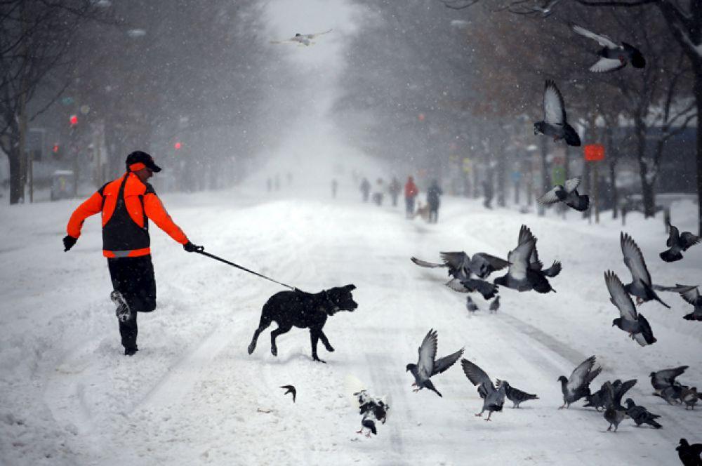 Мальчик с собакой во время снежной бури, Вашингтон.