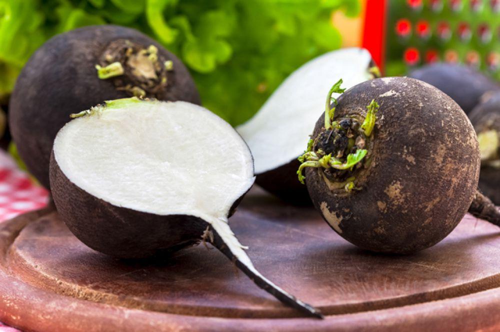 Белая и черная редька активизируют защитные силы организма, благотворно влияют на пищеварение, на работу легких и циркуляцию лимфы. Эти овощи обладают мочегонным и бактерицидным действием. Редьку нужно употреблять умеренно, добавлять понемногу в салаты, сочетать ее с другими овощами (морковью, сладким перцем). Но будьте внимательны, если у вас хронические заболевания желудочно-кишечного тракта, проблемы с печенью, то редьку лучше не есть.