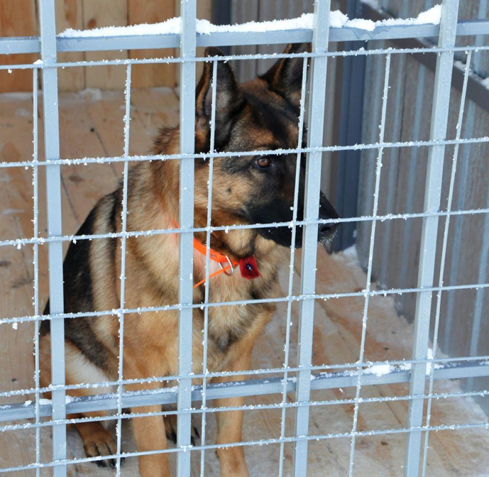Планируется создание специальной группы по разведению служебно-разыскных собак