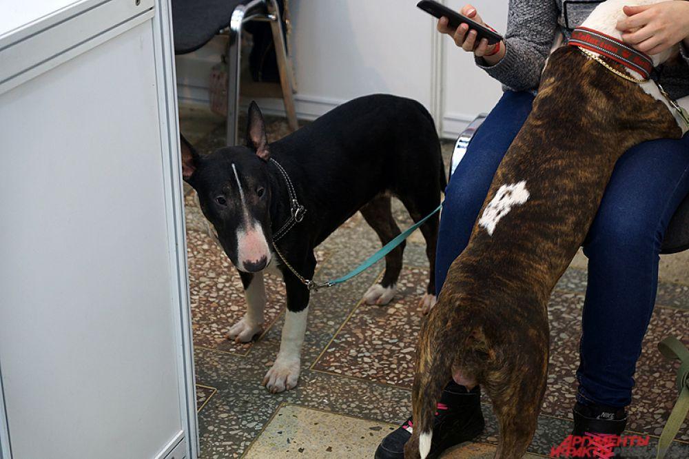 Все желающие могут проконсультироваться у экспертов по выбору той или иной собаки, а также приобрести необходимые товары для животных.