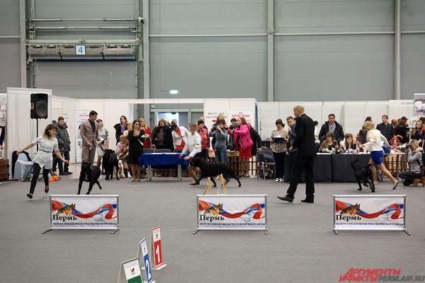Центральное событие экспозиции – показательные соревнования среди животных.