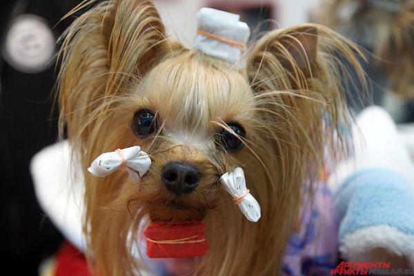 Международная выставка собак продлится два дня – 30 и 31 января.