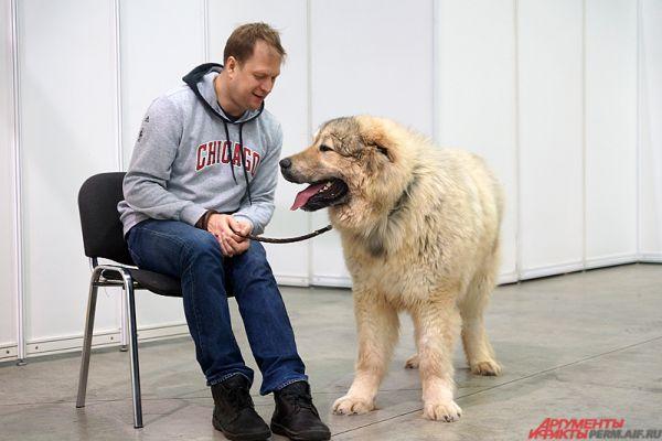 Большая кавказская овчарка.