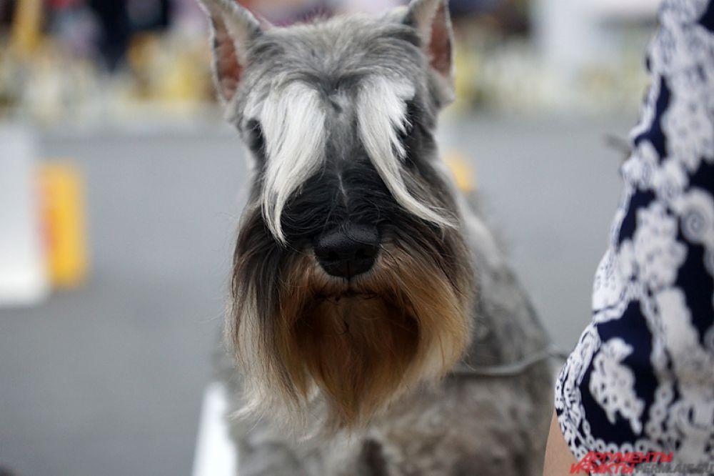 Традиционно для посетителей состоятся монопородные выставки. На площадке свои характер и выносливость продемонстрируют австралийская овчарка, аляскинский маламут, американская акита, самоедская собака, хаски и другие животные.