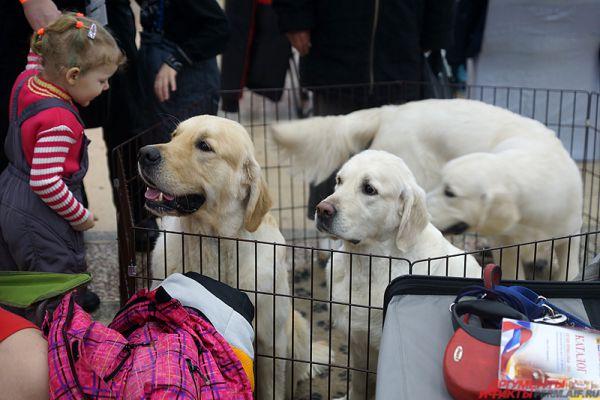 В Перми открылась большая выставка собак.