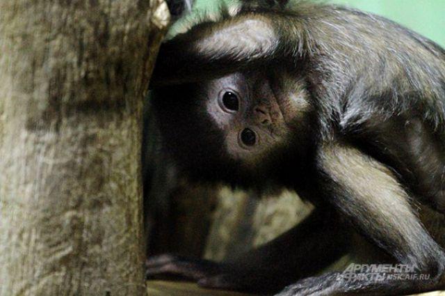 Объзьяны - самые любопытные животные