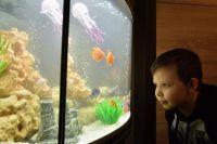 Даниил и его новый аквариум.