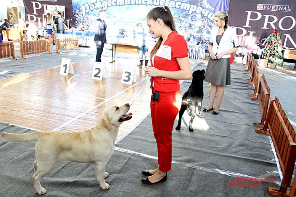 На площадку для «выступлений» выходили и крупные собаки, которые послушно выполняли команды и получали за это награды.