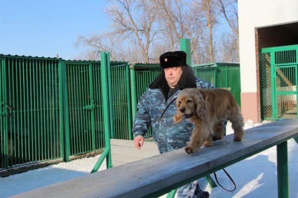 В 20-градусный мороз и в жару несут службу специалисты-кинологи Ростовской таможни и их четвероногие помощники.