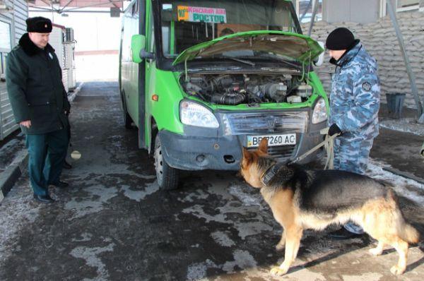 Служебные собаки в таможне – это уже практически незаменимые сотрудники, которых всё чаще и чаще привлекают к работе.