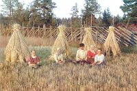 На жнитве. Урал, 1907 г.