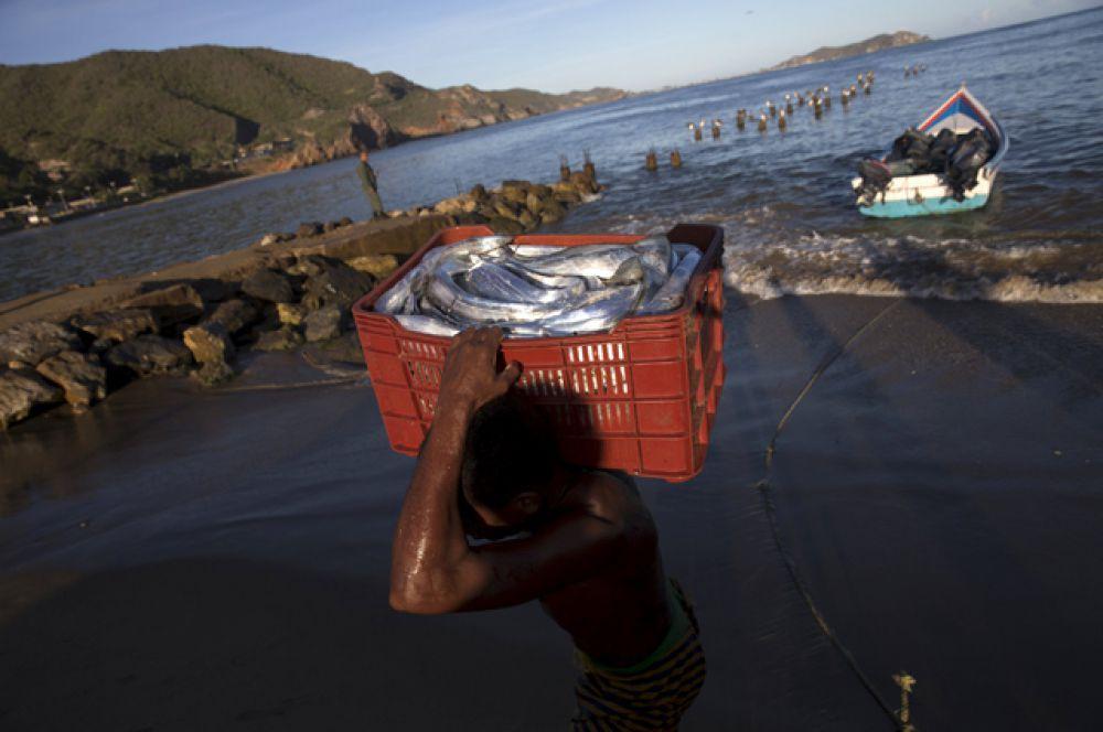 Человек несет корзину с контрабандной рыбой в бухте Рио Карибе.