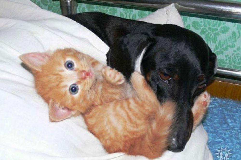 такса Кнопка и котенок Бусинка