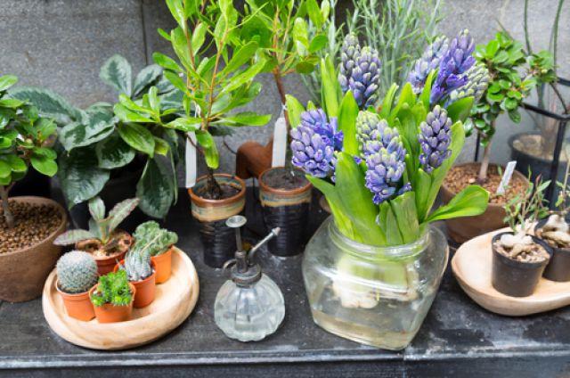 Комнатные цветы в перми купить садовые цветы рассада купить в спб