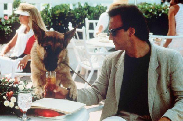 Наверняка многие помнят фильм «К-9: Собачья работа», вышедший в 1989-м — весёлую историю про американского полицейского и его напарника — собаку по кличке Джерри Ли, который на всё имеет своё собственное мнение.
