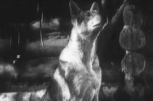 Джульбарс — собака минно-розыскной службы, участник Великой Отечественной войны. Джульбарс сумел обнаружить более 7 тысяч мин и 150 снарядов. 21 марта 1945 года за успешное выполнение боевого задания был награждён медалью «За боевые заслуги», это единственный случай за время войны, когда собака удостоилась боевой награды. Джульбарс снялся в фильме «Белый Клык».
