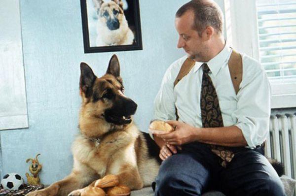 Сериал «Комиссар Рекс» о немецкой овчарке — штатном сотруднике Венской криминальной полиции в отделе по расследованию убийств. Чуткий нос, бесстрашие и преданность друзьям-полицейским сделали его настоящей грозой преступного мира Австрии.