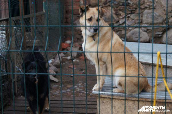 Девяносто процентов «бродяжек» - выброшенные домашние собаки либо их потомство.