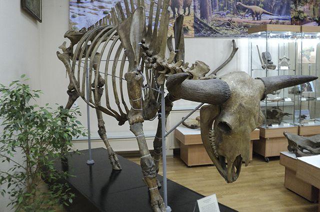 Экспонаты в краеведческом музее представлены самые разные.