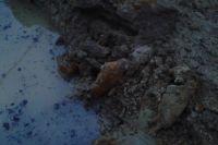 На месте будущей свинофермы под Нестеровом нашли 6 минометных снарядов времен ВОВ.