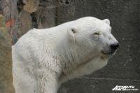 На Куршской косе открыли выставку фотографий про полярных медведей.