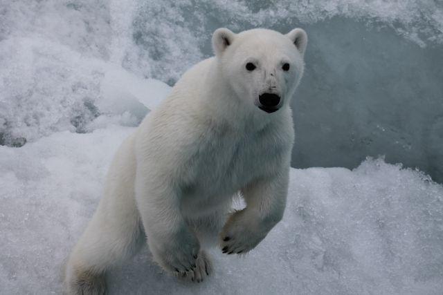 Музей Мирового океана подготовил выставку про моржей, китов и медведей.