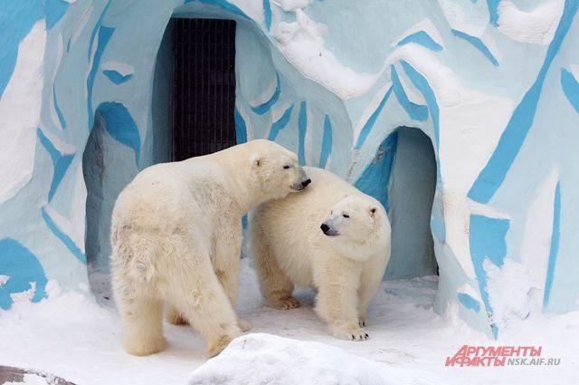 Ещё один медвежонок родился у Кая и Герды.