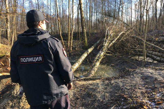 Ради незаконной добычи янтаря трое калининградцев вырубили 60 деревьев.