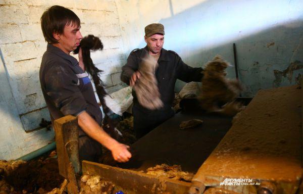 Процесс производства валенок начинается с расчесывания шерсти. Для этого используются специальные машины
