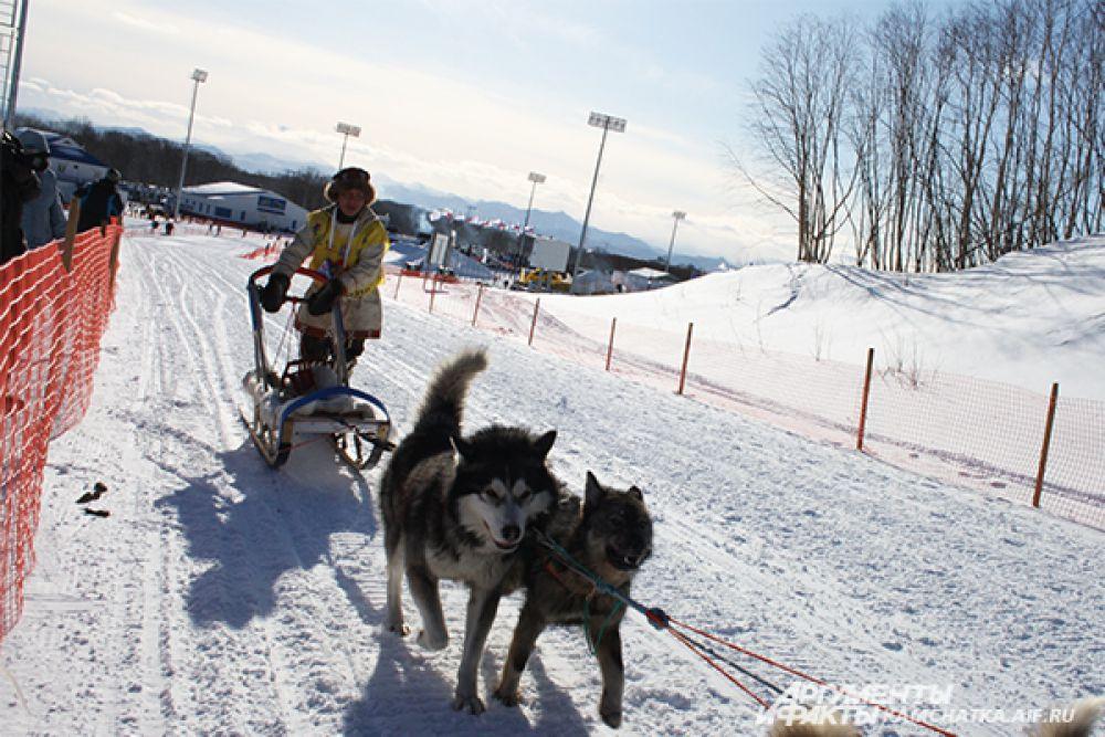 Каюрам предстоит преодолеть дистанцию в 1 398 километров от города Петропавловск-Камчатский до села Тиличики. Финишировать каюры должны 31 марта.
