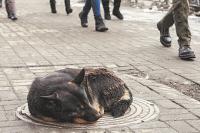 Убитая собака не имела дома.
