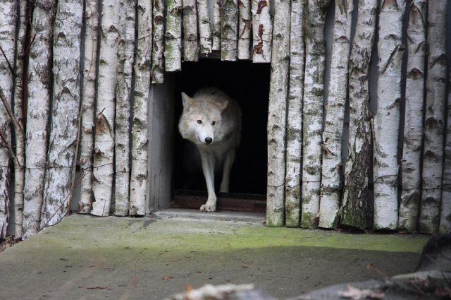 Животным создали привычную для них среду обитания.