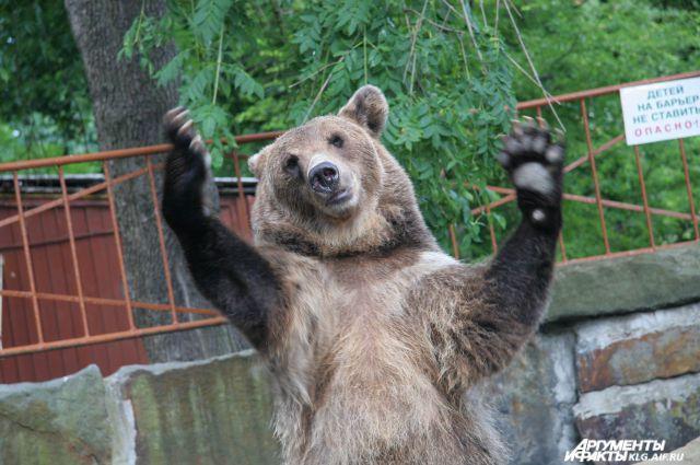 Власти Калининграда выделят деньги на ремонт аварийного «Медвежатника».