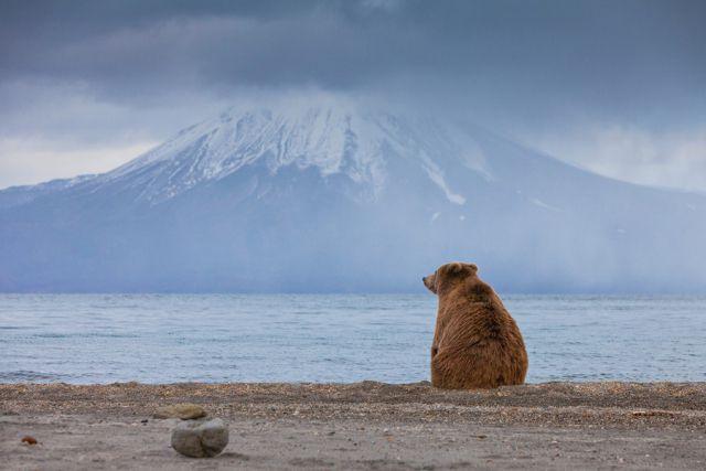 Медведь на берегу Курильского озера на фоне вулкана Ильинского