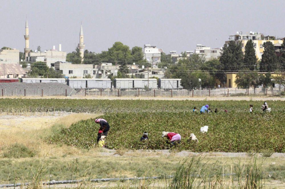Фермеры собирают урожай в городе Эт-Телль-эль-Абьяд на сирийско-турецкой границе.