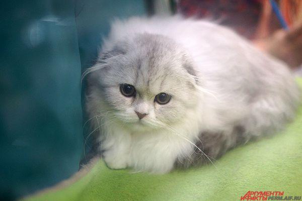 Во многих культурах кошки считаются священными животными.