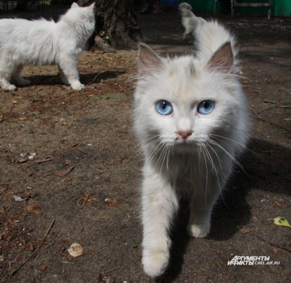 Обычно глаза кошек жёлтые или зелёные, но бывают и исключения.