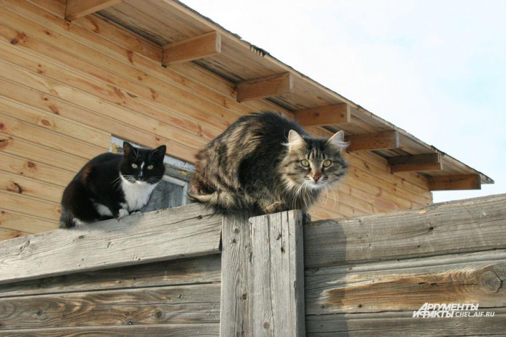 Кошка есть практически в каждом доме, а часто и не одна.